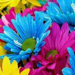 daisies-52602_1920