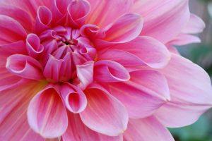 flower-1181865_1920