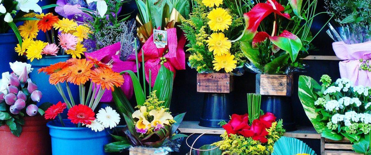 flowers-1384623