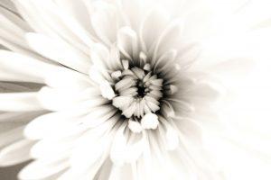 flowers-20270_1920