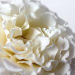 rose-600299_1920