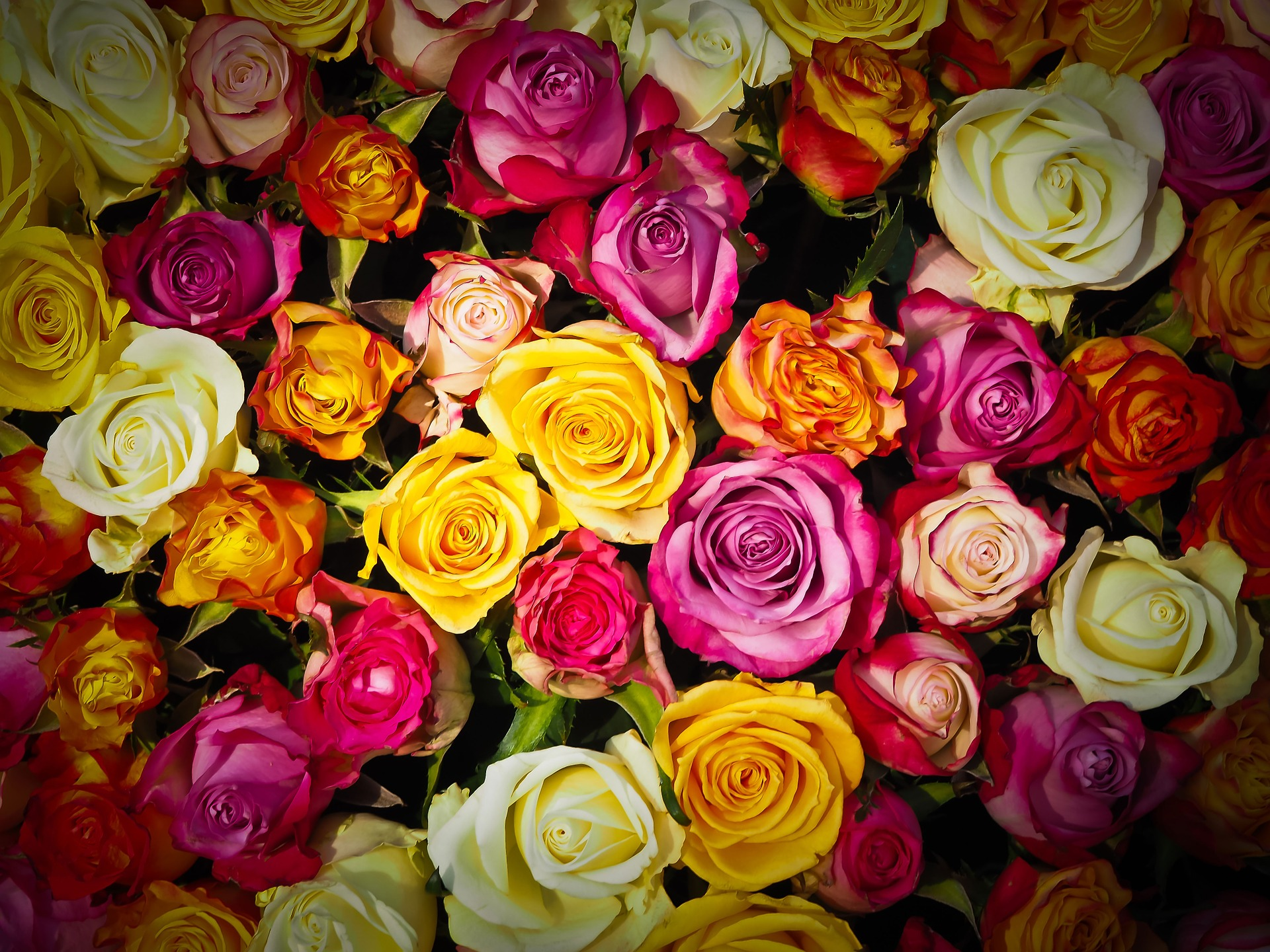 roses-1229148_1920