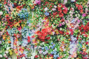 pexels-photo-31101