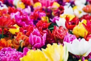 母の日にお花を