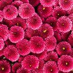 pexels-karolina-grabowska-4622892